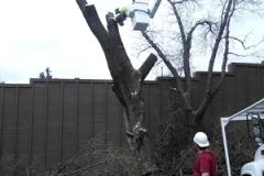 TreeService03