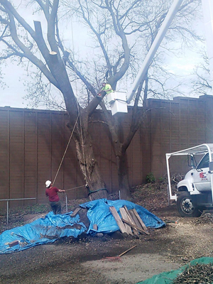 Minnesota Tree Service