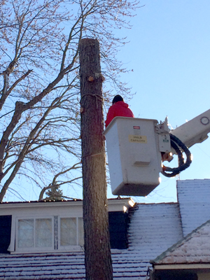 tree service in minnesota